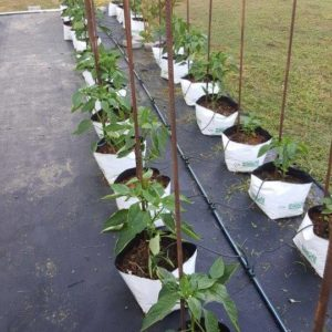 easyfil_growing_system